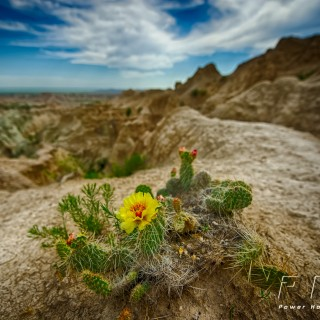 Badlands on the 4th {Rapid City Nature Photography}